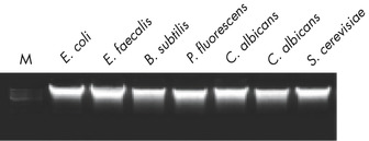 Figure 1. Get more microbial DNA from a range of sources.