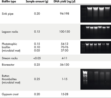 Figure 1: High-quality biofilm DNA isolated from a range of locations.