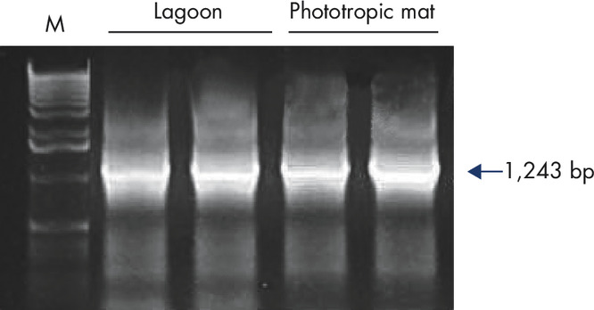 Figure 3: PCR-ready DNA from any biofilm.