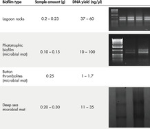 Figure 1. High-quality RNA yield from a range of biofilms.