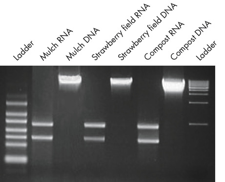 Figure 1. High-quality DNA and RNA from the same soil samples using PowerSoil Kits.