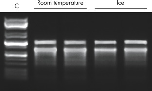 Figure 2. RNeasy PowerMicrobiome Kit isolated high-quality total RNA from canine stool samples.