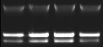 Figure 1. Reliable, high quality microbial DNA extraction.