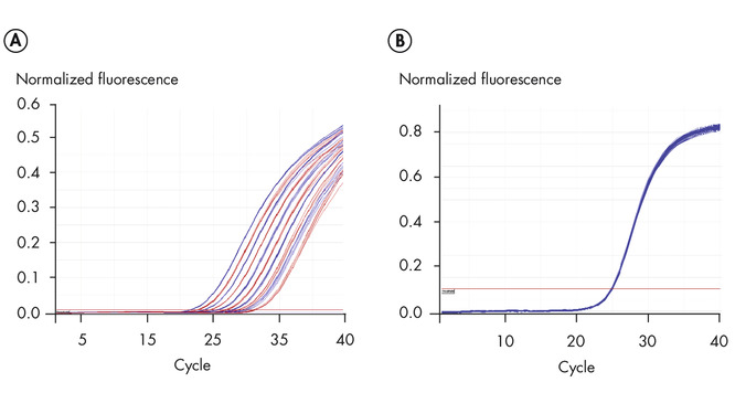 Precise real-time PCR analysis.