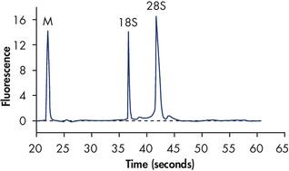 High-quality total RNA.