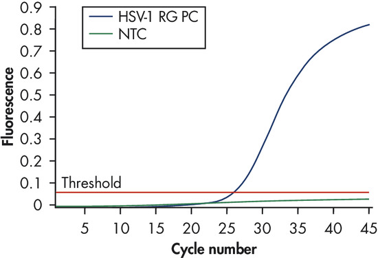 Detection of the HSV-1 positive control.