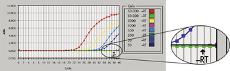 Efficient on-column removal of genomic DNA.