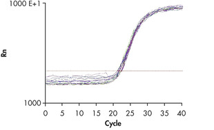 Real-time analysis of high-quality RNA from rat brain.