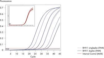Sensitive detection of BHV-1 on the Rotor-Gene Q.