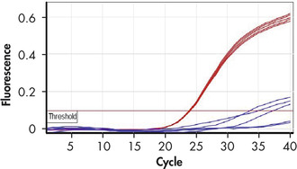 Successful amplification using small reaction volumes.