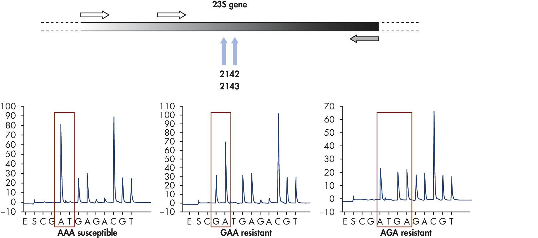 Analysis of antibacterial resistance in Helicobacter pylori.