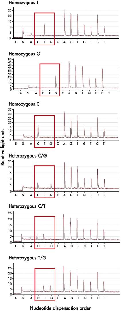 Analysis of a tri-allelic SNP.