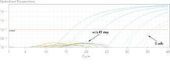 β-actin PCR with and without the RT step to detect DNA.