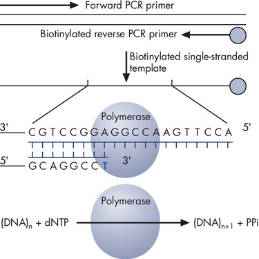 Principle of Pyrosequencing – step 1.