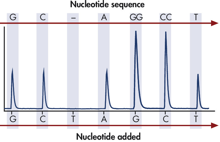 Principle of Pyrosequencing — step 5.