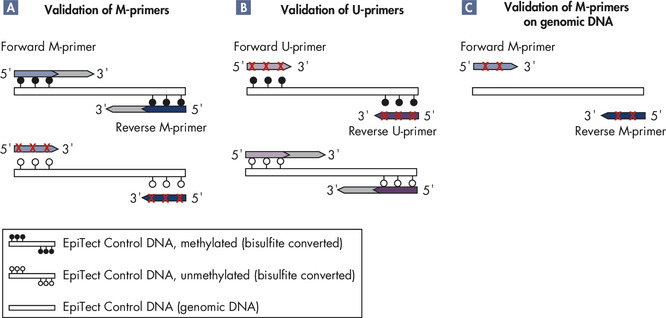 Use of EpiTect Control DNA in PCR for methylation analysis.