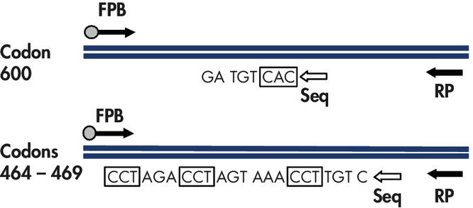 Illustration of the BRAF assay.