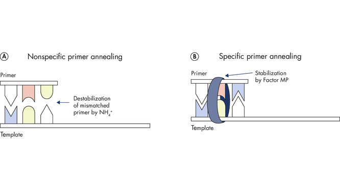 Unique multiplex PCR buffer promotes stable and efficient annealing.