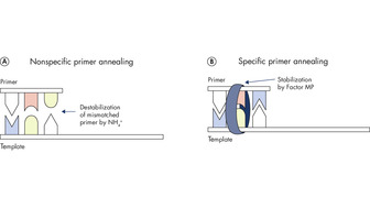 <p>Unique multiplex PCR buffer promotes stable and efficient annealing.</p>