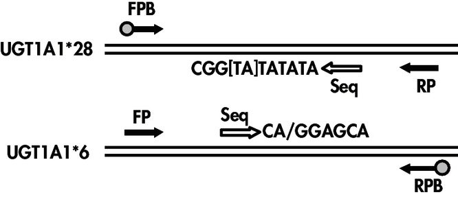 Illustrations of the UGT1A1 assays
