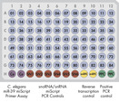 miScript miRNA PCR Array layout for 96-well plates.