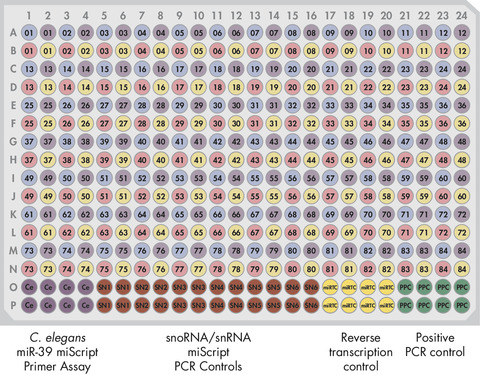 Pathway-Focused miScript miRNA PCR Array layout for plate formats E, G.