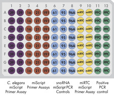 miScript miRNA QC PCR Array layout for plate formats A, C, D, F.