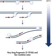 多重位移放大(MDA)技术。