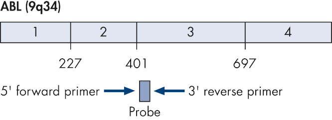 ABL control gene transcript.