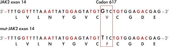 JAK2 mutation site identification.