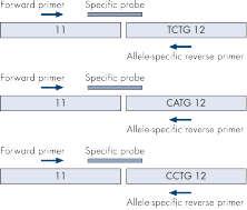 NPM1 alleles.