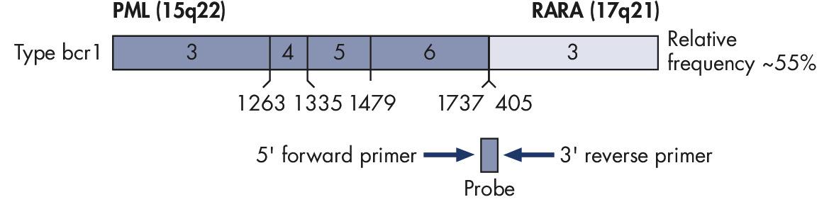 PML-RARA bcr1 gene transcript.