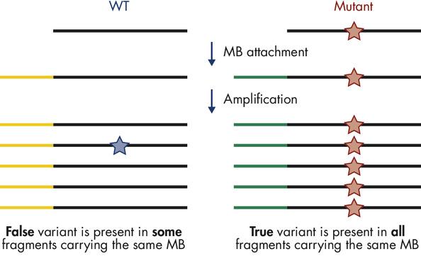 Principle of molecular barcodes
