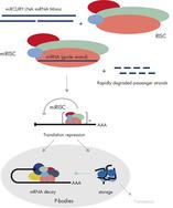 The distinct RNA triplex design ensures completely specific miRNA mimicry.