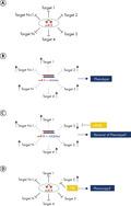 miRNA inhibitors vs. target site blockers.