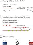 miRCURY LNA miRNA PCR System at a glance.