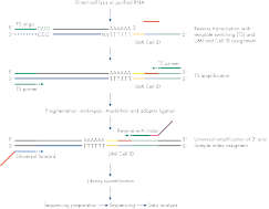 Innovative and Optimized QIAseq UPX 3' Transcriptome Kit Workflow.