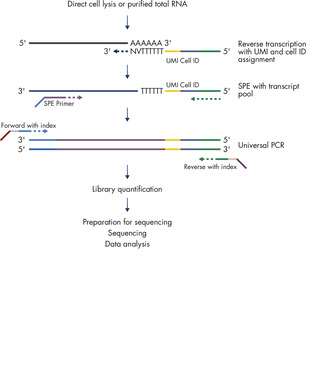 Principle of the QIAseq UPX 3' Targeted RNA Panel Workflow.