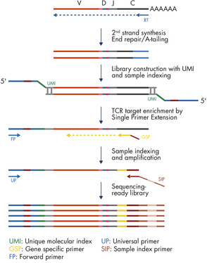 QIAseq Immune Repertoire RNA Library Workflow.
