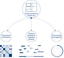Downstream applications of Hi-C sequencing data