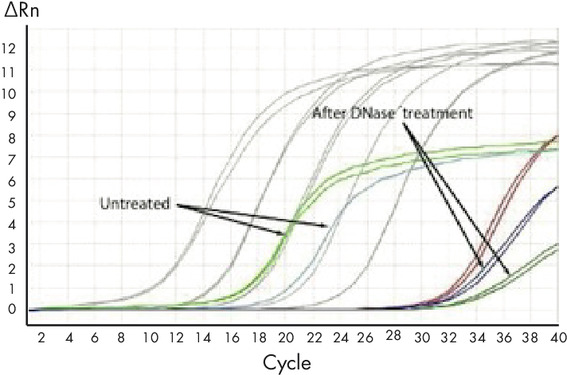 Figure 2: DNA levels in RNA pre- and post-DNase Max enzyme treatment