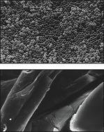 Oligotex particles and oligo-dT cellulose.