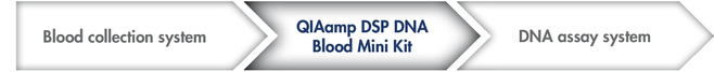 QIAamp DSP DNA Blood Mini Kit workflow.