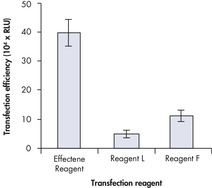 High transfection efficiencies using Effectene Reagent.