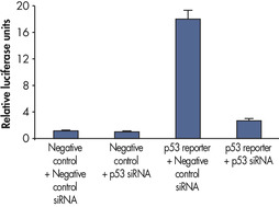 Assessing RNA interference phenotypes.