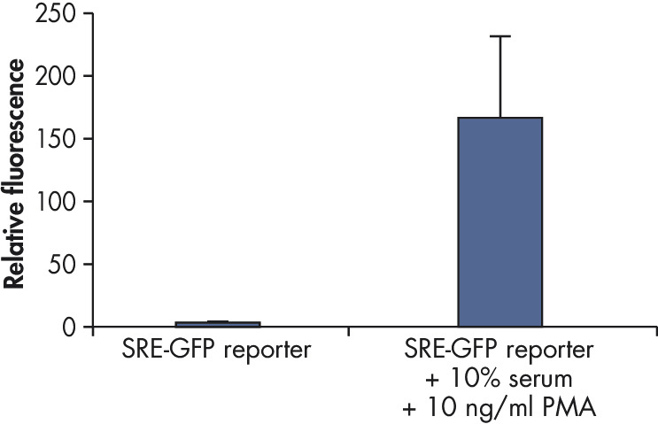Cignal Reporter Assay measures activation of serum response factor (SRF) transcription activity.