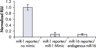 Comparable Downregulation by Endogenous miRNA and miScript miRNA Mimic Comparable Downregulation by Endogenous miRNA and miScript miRNA Mimic