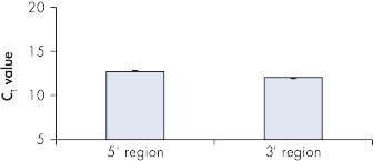 Equal amplification of 5' and 3' regions.