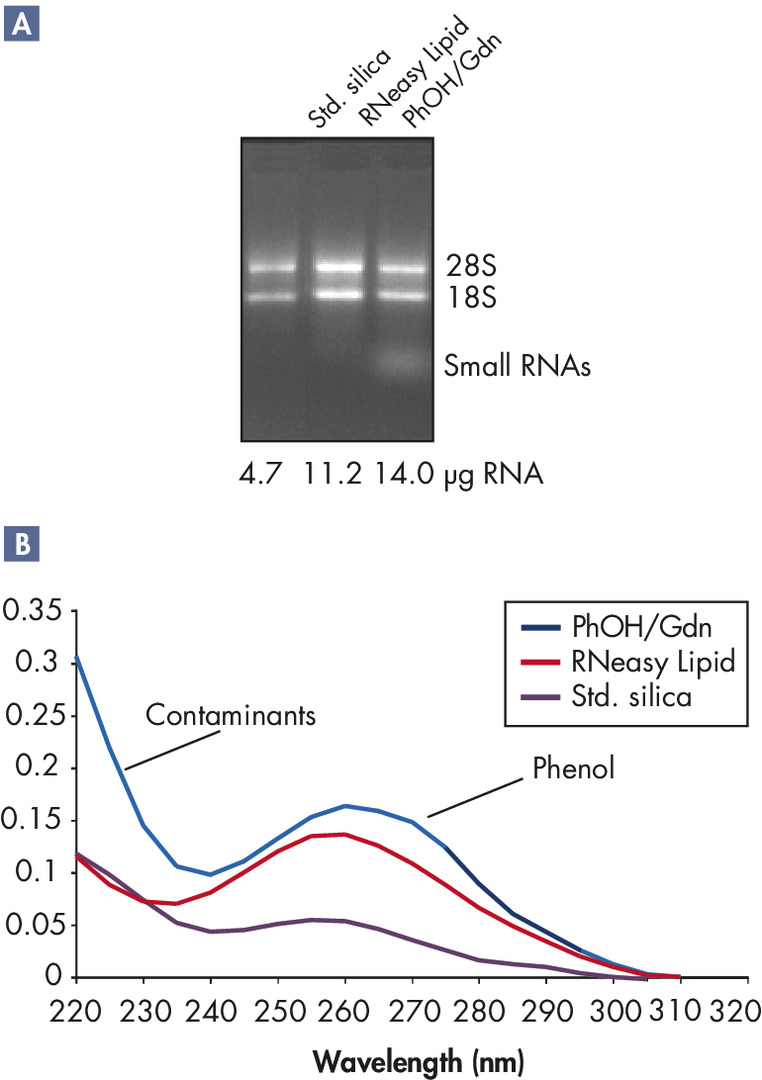 High yields of RNA without phenol carryover.