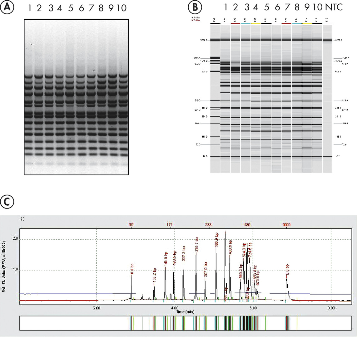 High-resolution analysis of multiplex PCR samples.